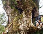 [巨樹・奇樹] 清武の大クスを見た(宮崎県)