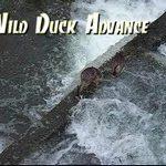 [動画] 激流に負けずに突き進む鴨の動画