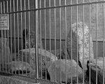 [路上観察] 石の監獄(東京都千代田区)