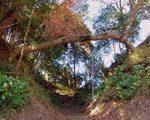 [城址] 堀切ひとまたぎの樹の見ごたえ 伊豆国韮山城(静岡県)