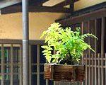 [古民家・古商家] 城館と思うのは早計かもしれない 一之江名主屋敷(東京都江戸川区)