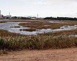 [土木] こんな葦原があったとは! 芝川第一調節池(さいたま市)